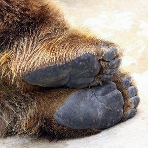 動物の足裏の偏平足の写真