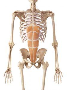 横浜の腰痛治療の整骨院「宮谷小交差点前せいこついん」の腰痛予防の腹直筋イメージ