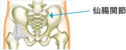 骨盤の仙腸関節のイラスト
