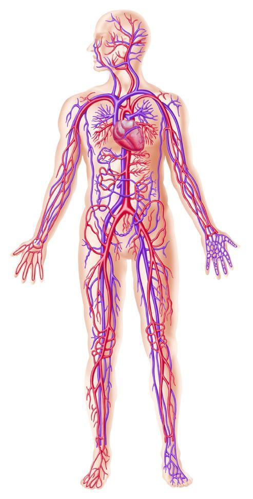 遠絡(えんらく)療法の治療で体の循環が良くなるイメージ