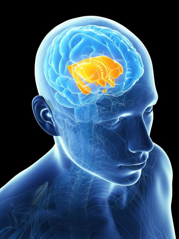 遠絡(えんらく)療法の治療ターゲットTなる脳幹部のイメージ写真