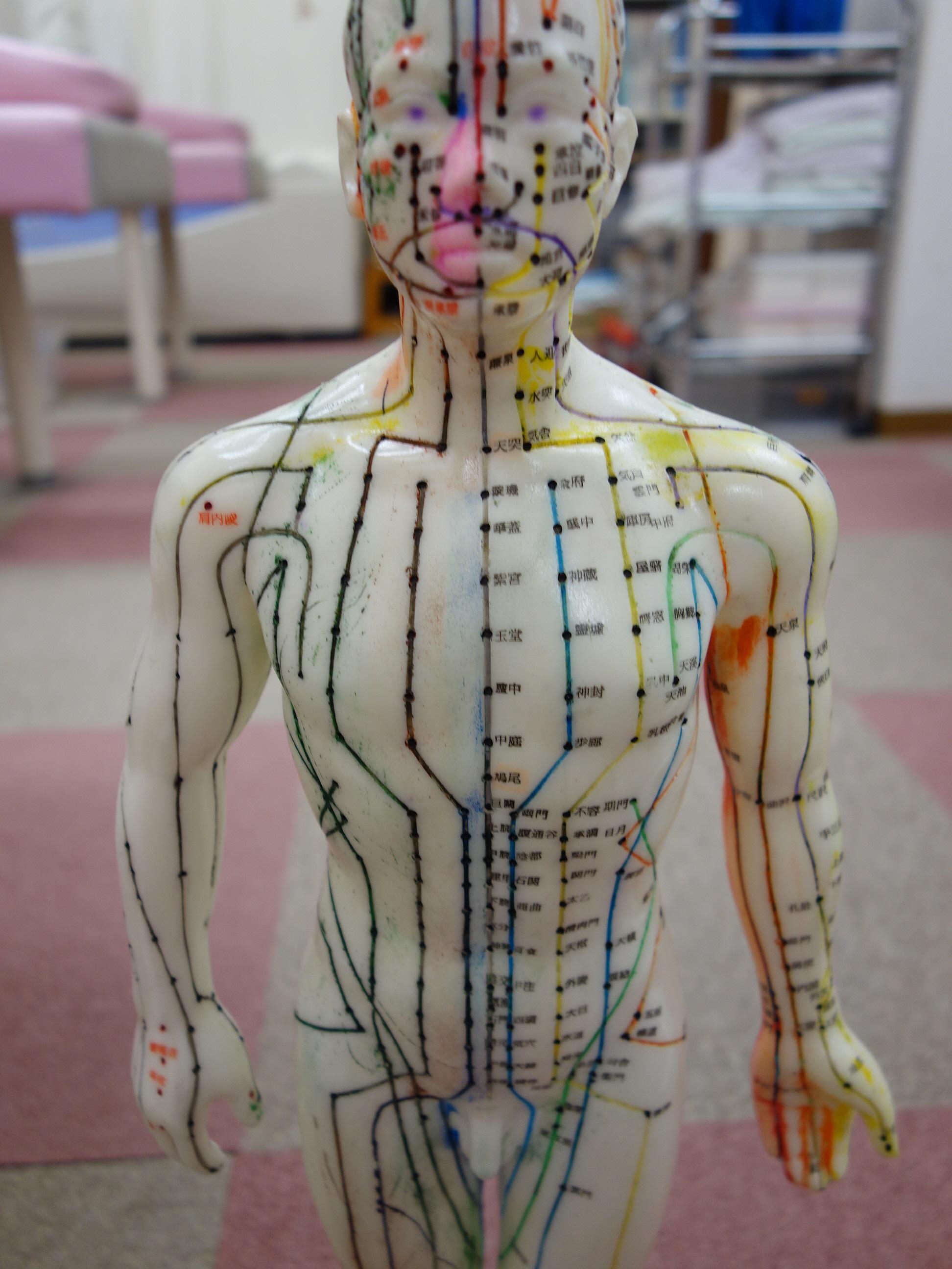 遠絡(えんらく)療法の基本となる経絡人形の写真