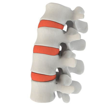椎間板のイラスト図