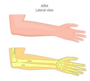 テニス肘・ゴルフ肘治療の整骨院「宮谷小交差点前せいこついん」の肘のイラスト